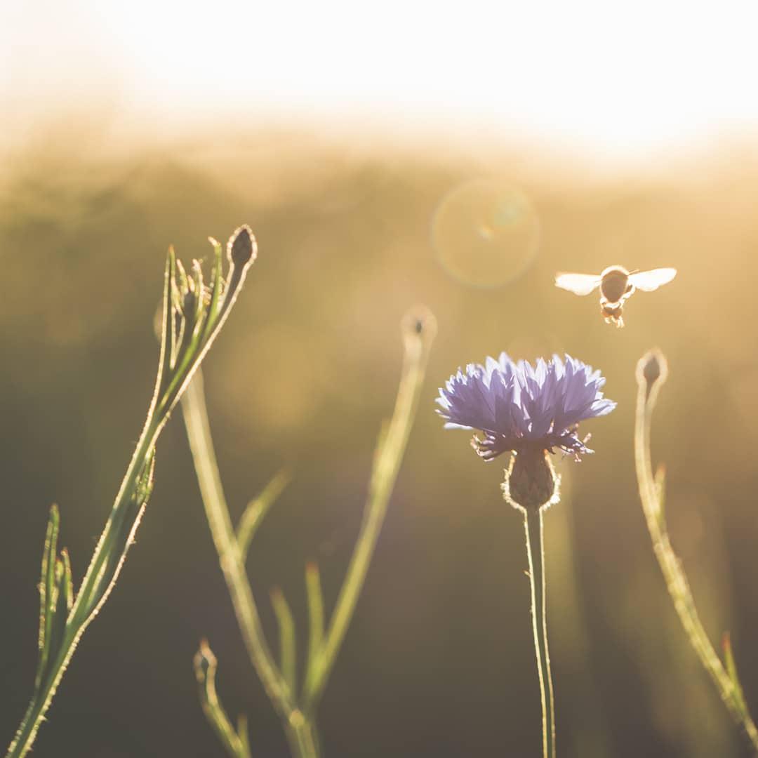 Strategien der Bienen gegen Hitze  Kopieren